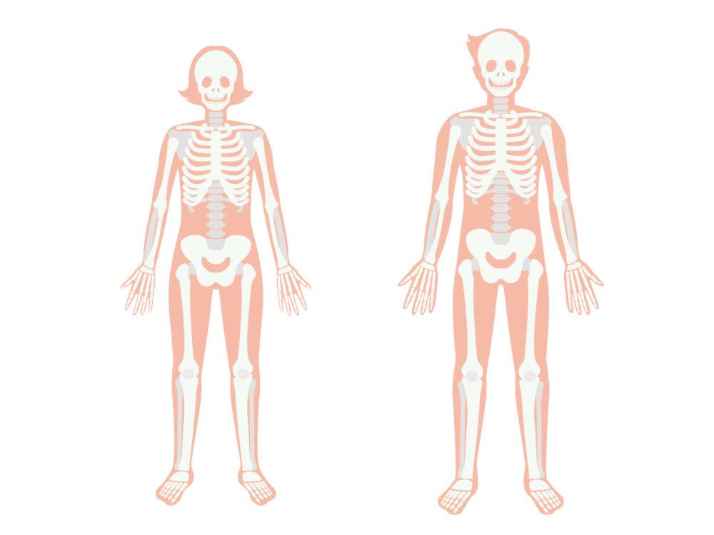 骨盤男女差について、男性女性それぞれの画像を徹底比較