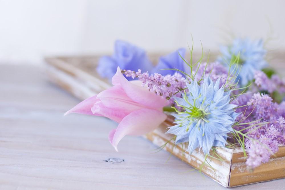 整体ショーツNEO-flower