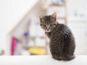 子どもの猫背