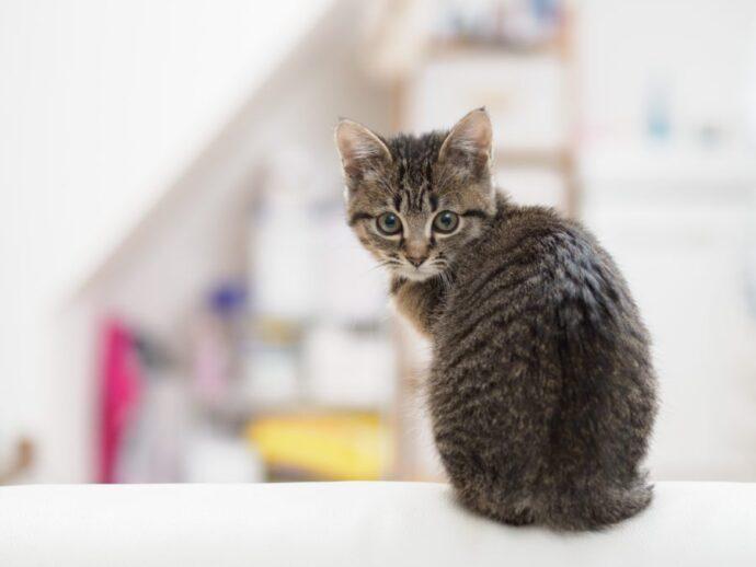 子どもの猫背が10秒ストレッチで2ヶ月後に背筋ピンッ!