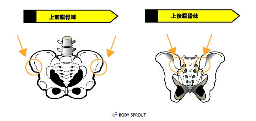 上前腸骨棘(じょうぜんちょうこつきょく)と上後腸骨棘(じょうごちょうこつきょく)
