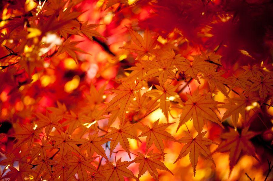秋バテってどんな症状?骨盤を整えて体をすっきりリセット