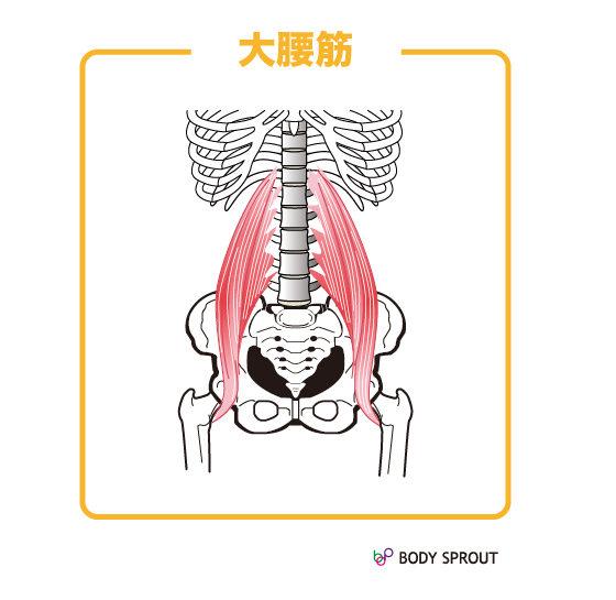 大腰筋の図